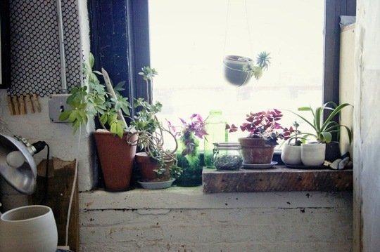 Gradina urbana: 10 idei pentru amenajarea unui colt cu flori intr-un apartament - Poza 1