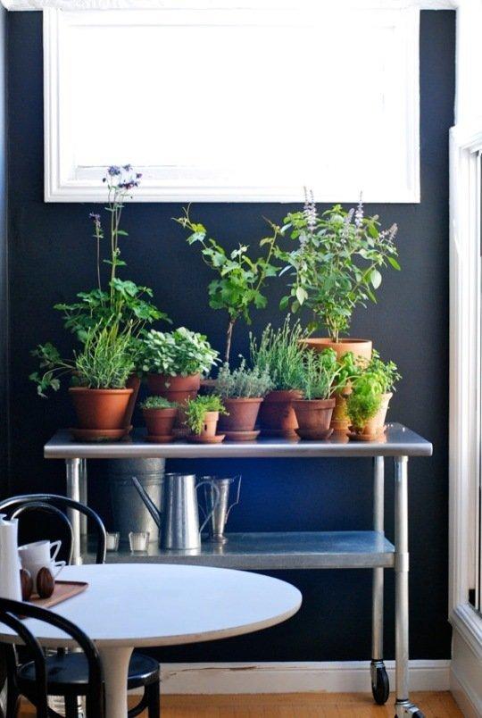 Gradina urbana: 10 idei pentru amenajarea unui colt cu flori intr-un apartament - Poza 9
