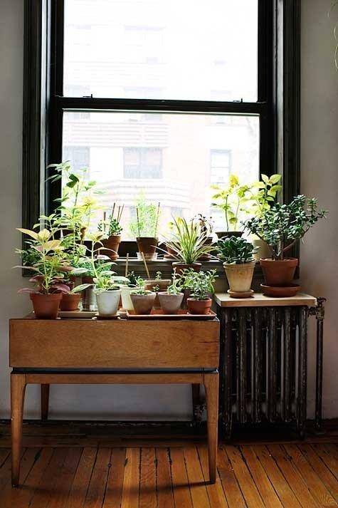 Gradina urbana: 10 idei pentru amenajarea unui colt cu flori intr-un apartament - Poza 7