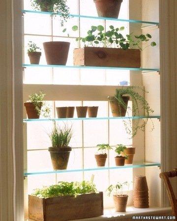 Gradina urbana: 10 idei pentru amenajarea unui colt cu flori intr-un apartament - Poza 6