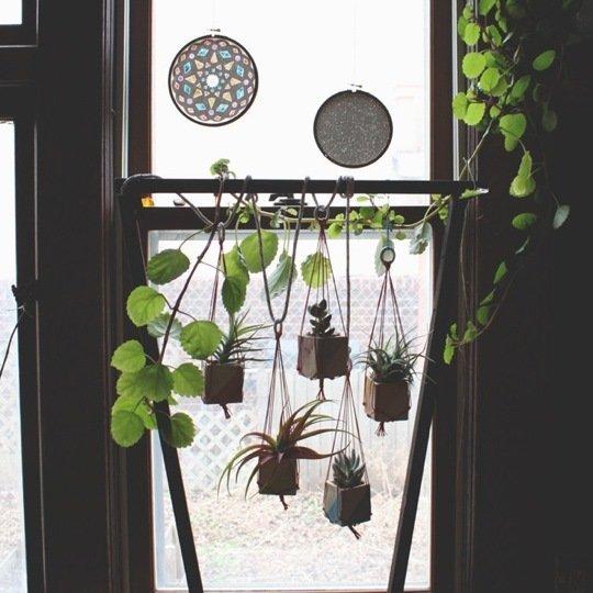Gradina urbana: 10 idei pentru amenajarea unui colt cu flori intr-un apartament - Poza 5