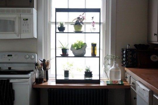 Gradina urbana: 10 idei pentru amenajarea unui colt cu flori intr-un apartament - Poza 3