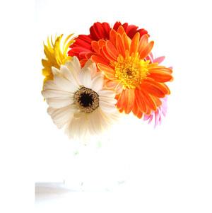 Secrete pentru pastrarea prospetimii florilor - Poza 1