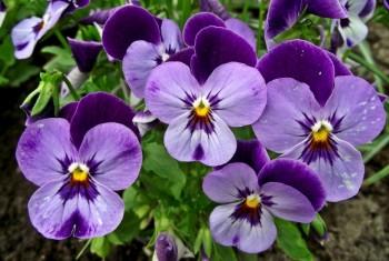 Tipuri de flori de primavara pentru gradina ta