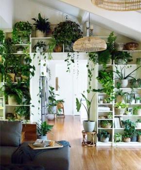Gradina urbana: 10 idei pentru amenajarea unui colt cu flori intr-un apartament