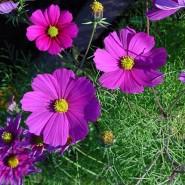 Plante cu crestere rapida pentru gradina ta